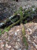 Mossy σταυρός στοκ φωτογραφίες με δικαίωμα ελεύθερης χρήσης