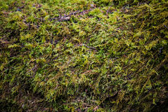 Mossy σύσταση Στοκ εικόνες με δικαίωμα ελεύθερης χρήσης