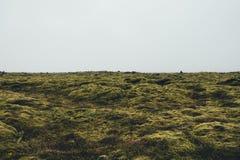 Mossy τοπίο στην Ισλανδία Στοκ Εικόνες