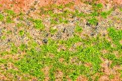 Mossy τούβλο Στοκ φωτογραφία με δικαίωμα ελεύθερης χρήσης