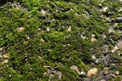 mossy Arkivfoto