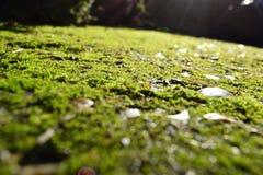 mossy Zdjęcie Stock