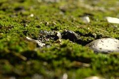 mossy Royaltyfria Foton