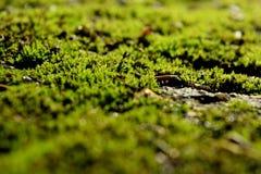 mossy Arkivfoton