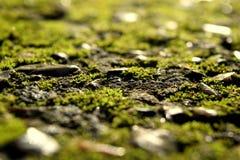 mossy Royaltyfri Foto