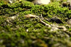 mossy Royaltyfria Bilder