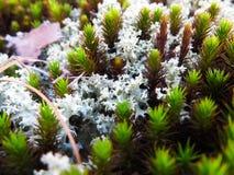 mossy Imagens de Stock Royalty Free