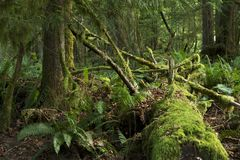 Mossy τροπικό δάσος Στοκ Εικόνα