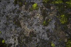 Mossy old rough stone surface texture. Mossy aged shabby gray rough stone surface texture background Stock Photos