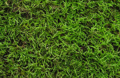Mossy bakgrundstextur Arkivfoto
