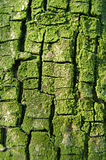 Mossy bark Stock Photography