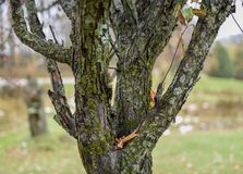 Bark tree royalty free stock photos