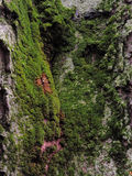 Mossy bark Stock Image