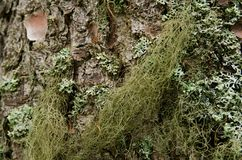 Mossy bark Royalty Free Stock Photography
