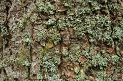 Mossy bark Royalty Free Stock Images