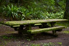 Mossy Bench Stock Image