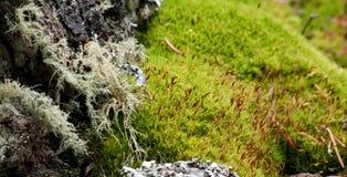 mossy bisarr liggande Royaltyfria Bilder