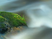 Mossy boulder with grass leaves in the mountain river. Fresh colors of grass, deep green color of wet moss and blue milky water Royalty Free Stock Image