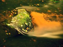 Mossy boulders  with first colorful leaves in water of mountain river. Royalty Free Stock Photo