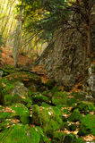 Mossy boulders with leaves in high mountains Stock Photos