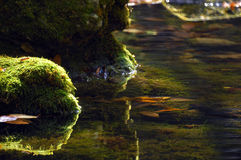 Mossy boulders mirroring in a river Stock Photos