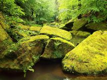 Mossy boulders in water under fresh green trees at mountain river. Fresh spring air in the evening after rainy day Royalty Free Stock Photo