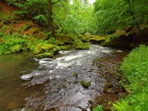 Mossy boulders in water under fresh green trees at mountain river. Fresh spring air in the evening after rainy day Royalty Free Stock Image