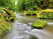 Mossy boulders in water under fresh green trees at mountain river. Fresh spring air in the evening after rainy day stock images