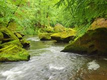 Mossy boulders in water under fresh green trees at mountain river. Fresh spring air in the evening after rainy day Royalty Free Stock Photos