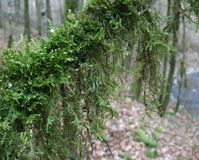 Mossy branch Stock Photos