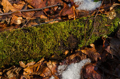 Mossy branch Royalty Free Stock Photos