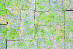 Mossy brick floor Royalty Free Stock Photography