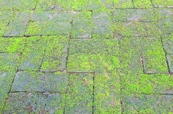 Mossy brick floor Royalty Free Stock Images