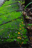 Mossy Brick And Orange Dots Stock Photos
