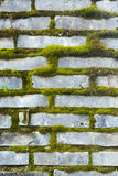 Mossy Bricks. Slate brick wall filled in with bright green moss Royalty Free Stock Photos
