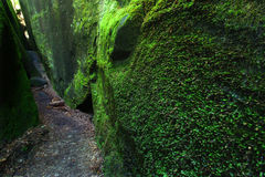 Mossy canyon in Alabama Royalty Free Stock Photos