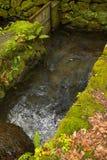 Mossy carp pond, Takachiho, Miyazaki, Japan stock photos