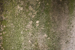 Mossy cement background Royalty Free Stock Image