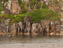 Mossy cliff with lagoon and sea gulls Royalty Free Stock Photos