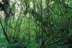 Mossy Cloud Forest Stock Photos