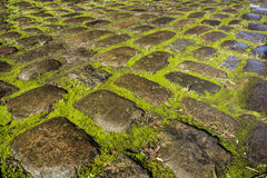 Mossy Cobbles Royalty Free Stock Photo