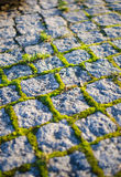 Mossy cobblestones Royalty Free Stock Images