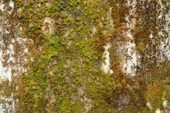 Mossy concrete old wall Royalty Free Stock Images