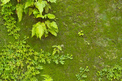 Mossy concrete wall Stock Images