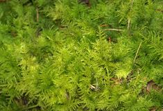 Mossy cover of vegetation Stock Images