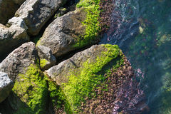 Mossy covered stones by the sea Stock Photo