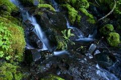 Mossy Creek Stock Photos