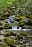 Mossy creek cascade Royalty Free Stock Photography
