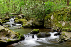 Mossy creek cascade Stock Photography