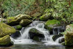 Mossy creek cascade waterfall Royalty Free Stock Image
